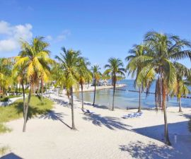 Palm trees on a white sand beach.
